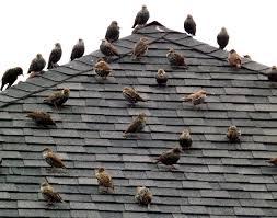 Clean Birds off roof