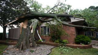 house roof damaged by tree