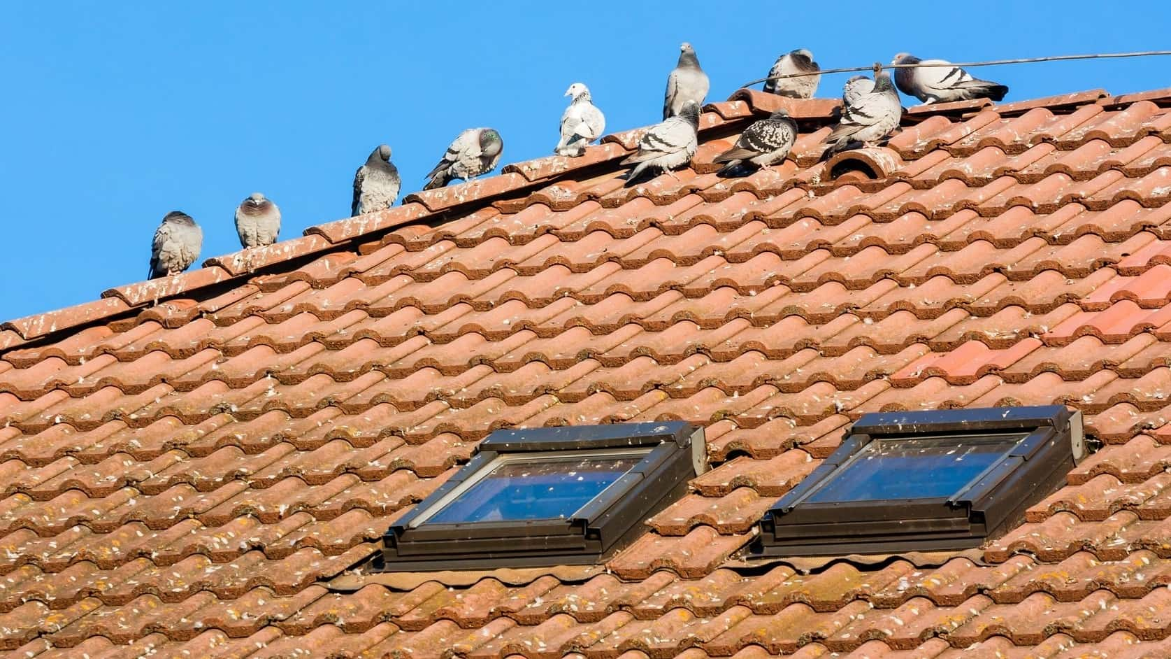 birds on roof