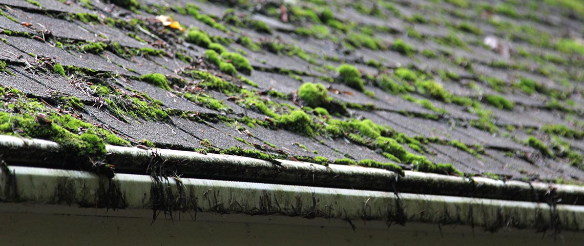 Getting Rid of Roof Moss